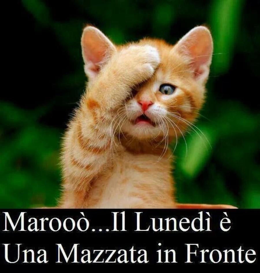 Marooò... il Lunedì è una mazzata in fronte!