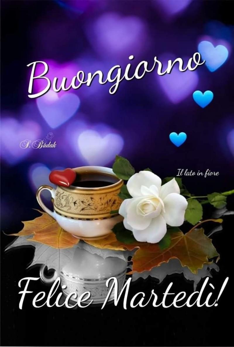 Buongiorno Felice Martedì! (il lato in fiore)