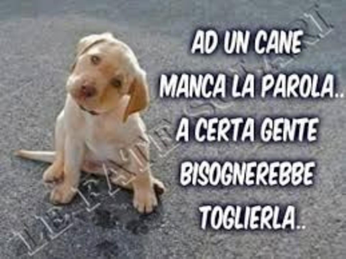 Ad un cane manca la parola... a certa gente bisognerebbe toglierla!