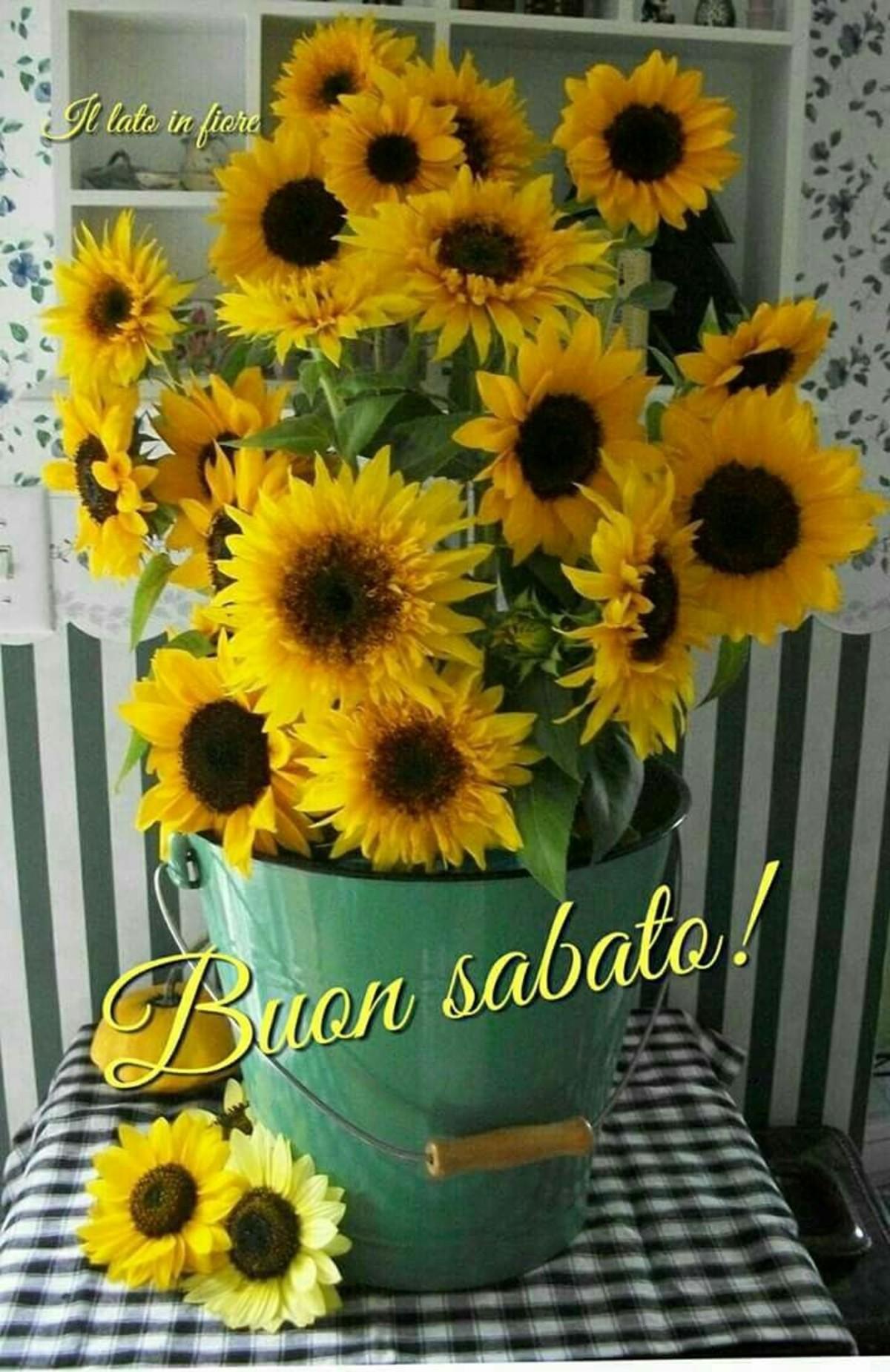 Buon Sabato! (il lato in fiore)