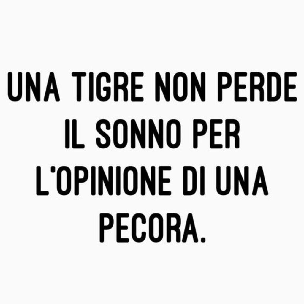 Una tigre non perde il sonno per l'opinione di una pecora.