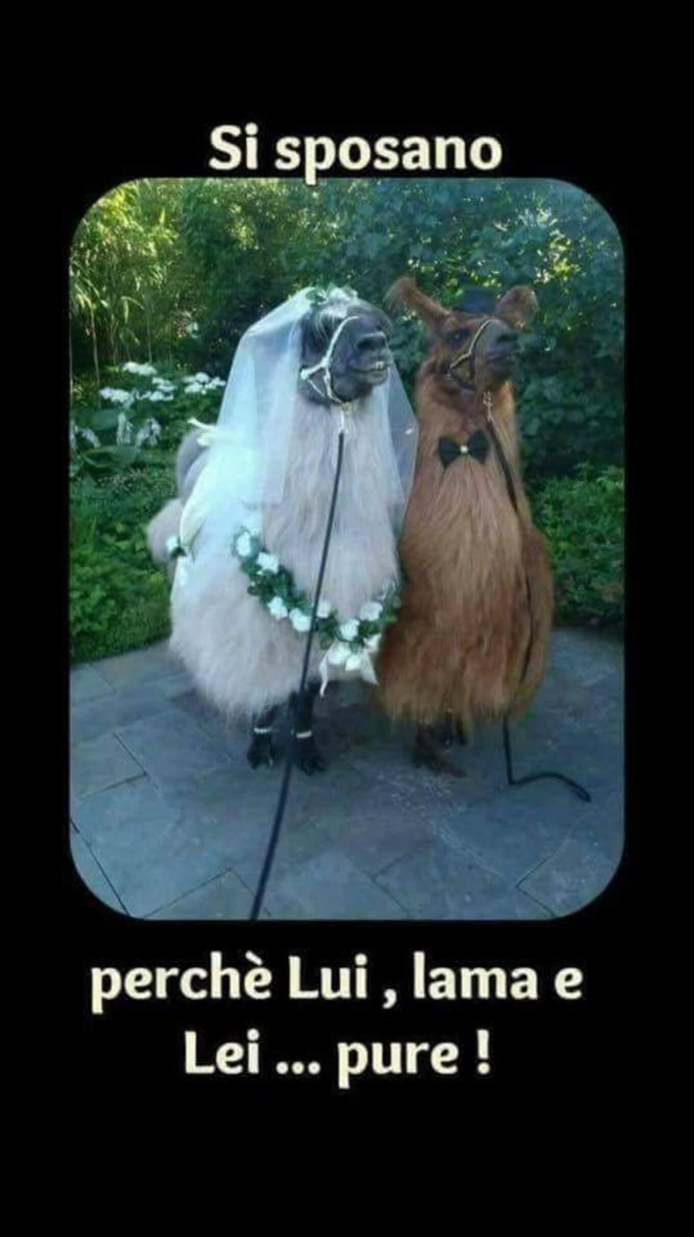 Si sposano perchè lui lama... e lei pure!
