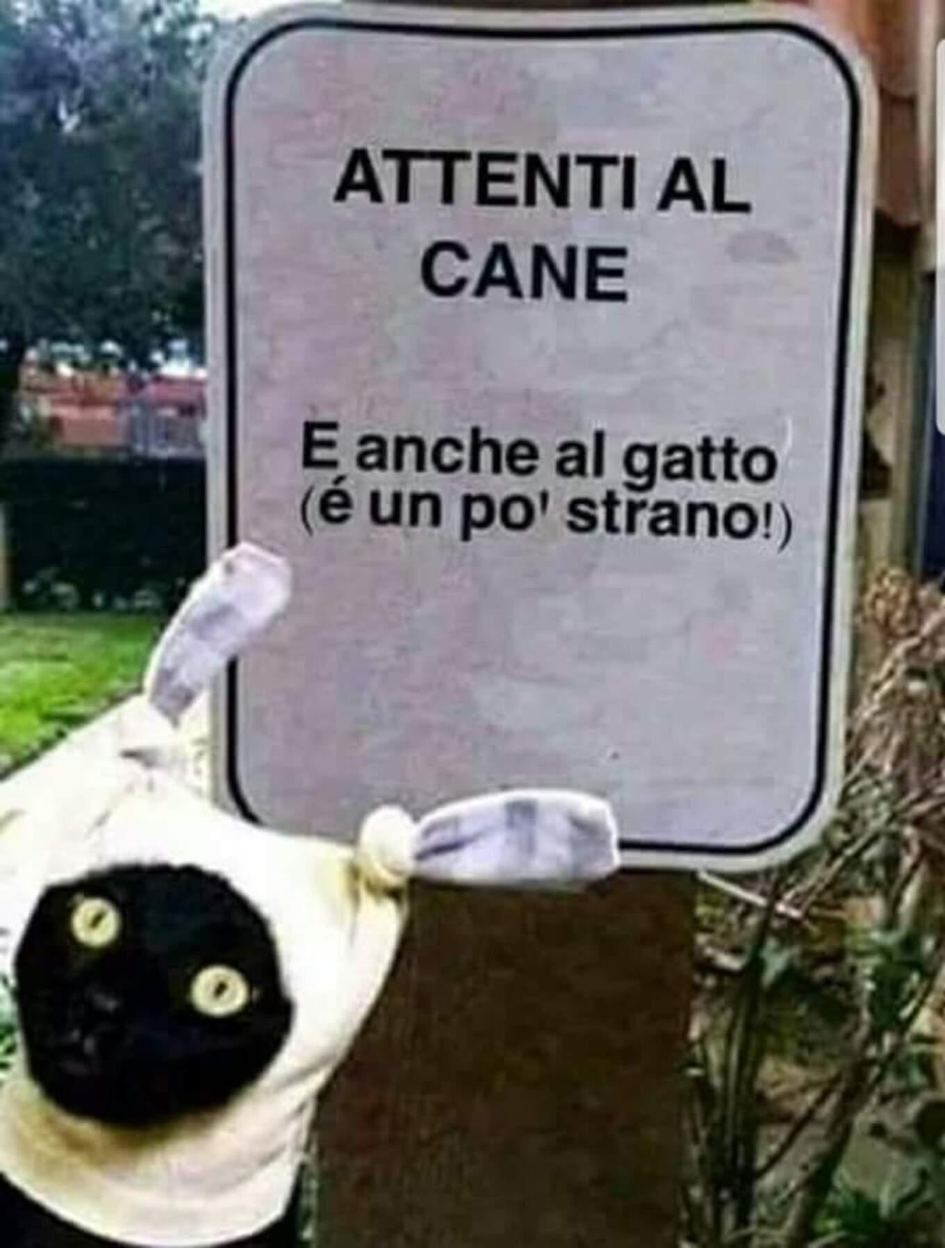 ATTENTI AL CANE... e anche al gatto (è un pò strano!)