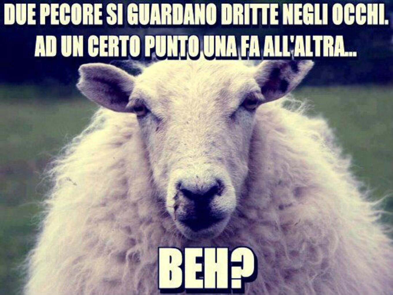 """Due pecore si guardano dritte negli occhi, ad un certo punto una fa all'altra: """"BEH?"""""""