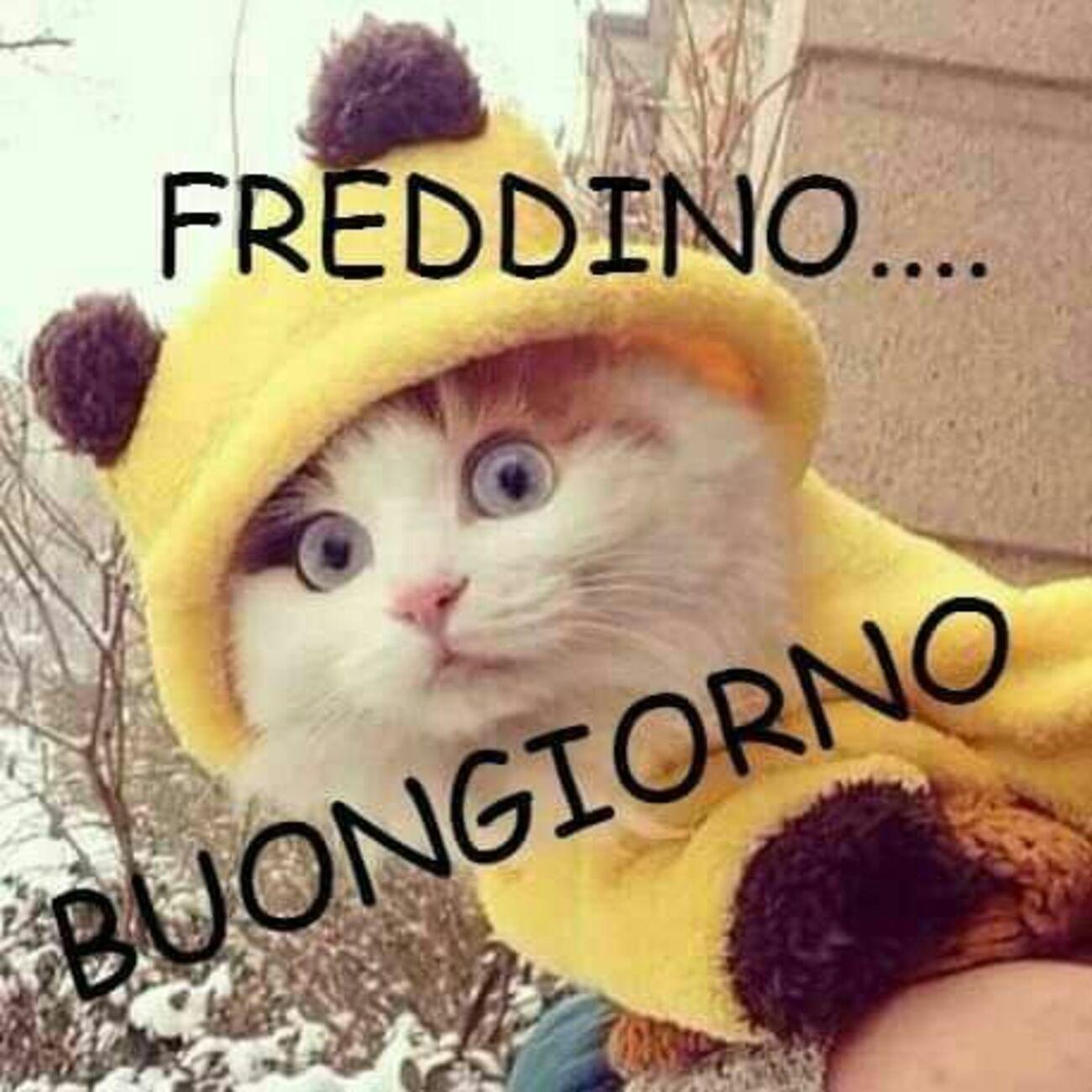 Freddino... Buongiorno
