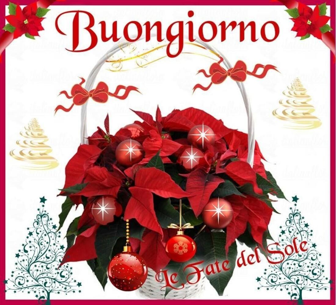 Buongiorno stella di Natale
