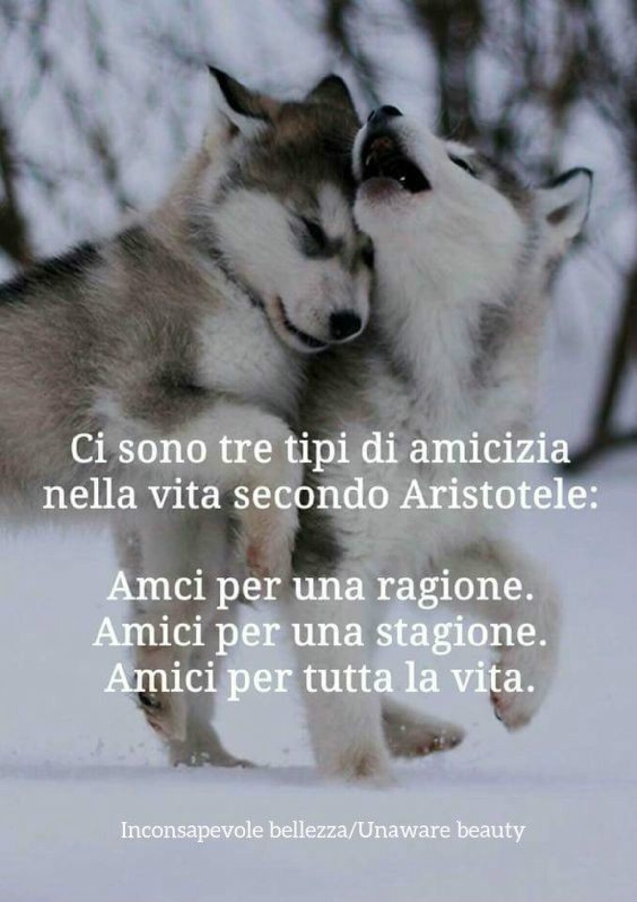 Ci sono tre tipi di amicizia nella vita secondo Aristotele: Amici per una ragione, Amici per una stagione, Amici per tutta la vita.