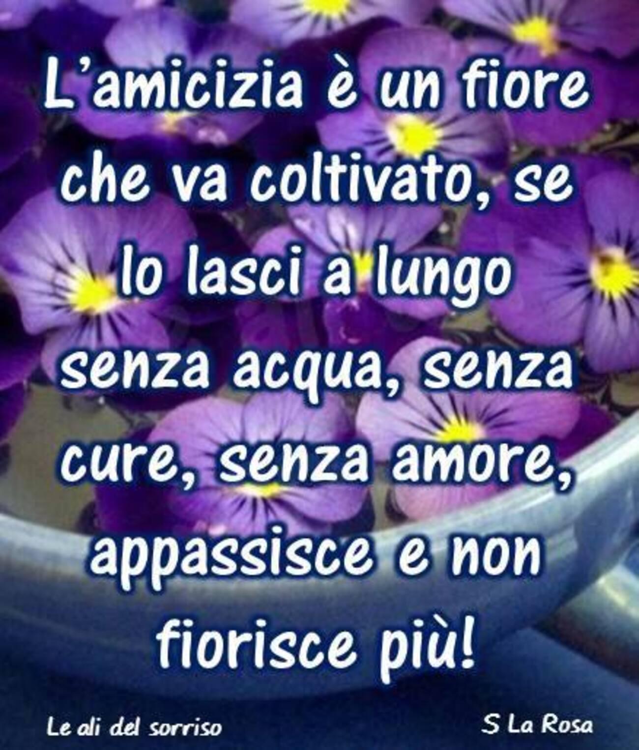 L'amicizia è un fiore che va coltivato, se lo lasci a lungo senz'acqua, senza cure, senza amore, appassisce e non fiorisce più!