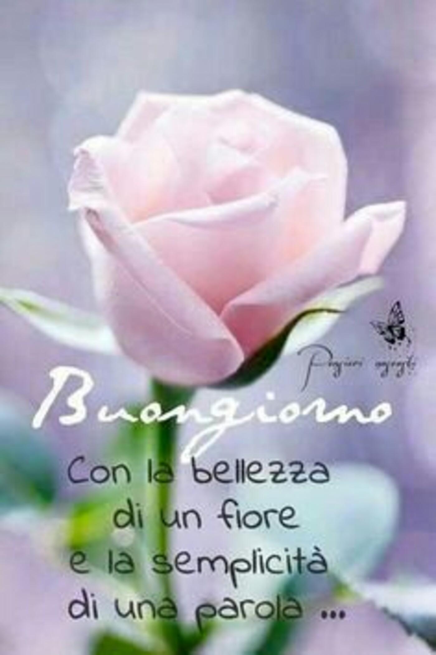 Buongiorno con la bellezza di un fiore e la semplicità di una parola...