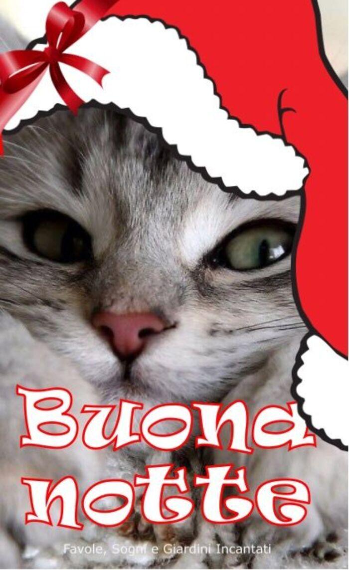 Buona Notte da un gattino con il cappello natalizio